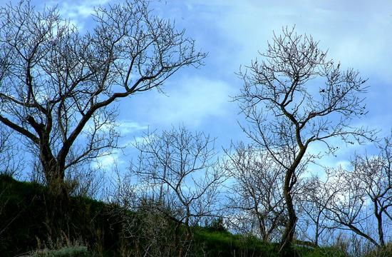 natura - Castronovo di sicilia (2138 clic)