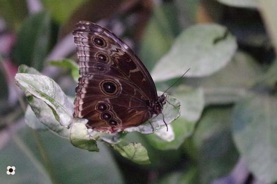 farfalla - MODICA - inserita il 09-Nov-11