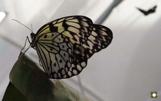 farfalle - MODICA - inserita il 09-Nov-11