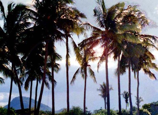 Thailandia, palme e sole (651 clic)