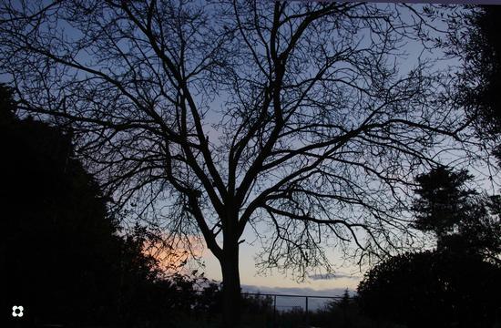 il noce in una sera d'autunno al Greenclub - Modica (2469 clic)