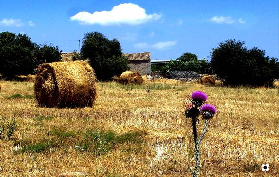 paesaggio rurale fra Modica e Pozzallo (3214 clic)