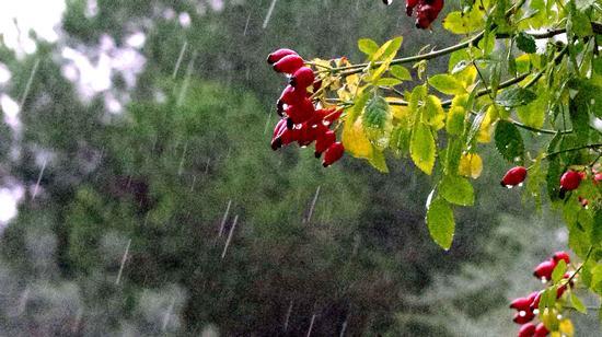 pioggia d'autunno - Modica (2575 clic)