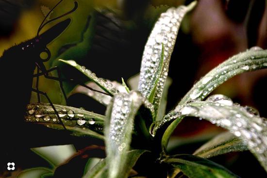 voglia di brina - MODICA - inserita il 11-Nov-11