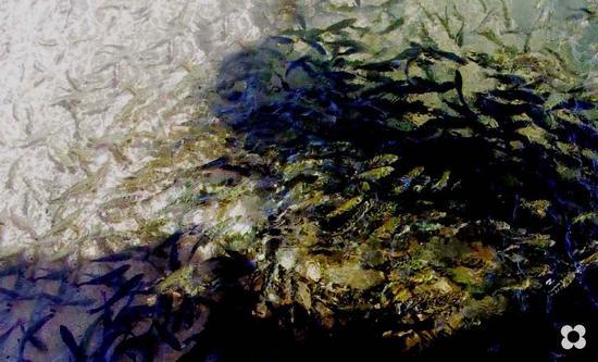 pesci - Marzamemi (1365 clic)