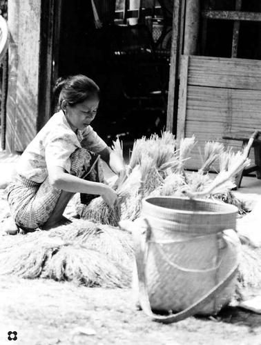 Borneo, vita nel villaggio Toraja (710 clic)