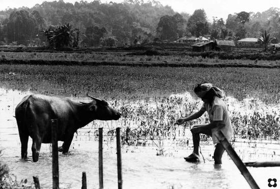 Borneo, semi controluce   (635 clic)