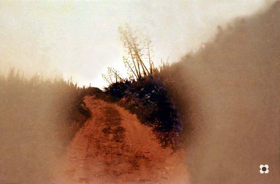 odore di agavi e di mare sulla strada del Pisciotto - Sampieri (2448 clic)