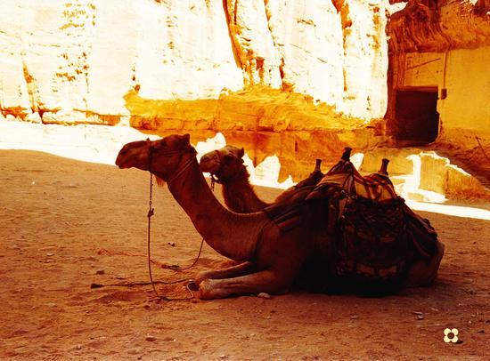 Petra, nella piazza del Tesoro ingresso della città. (571 clic)