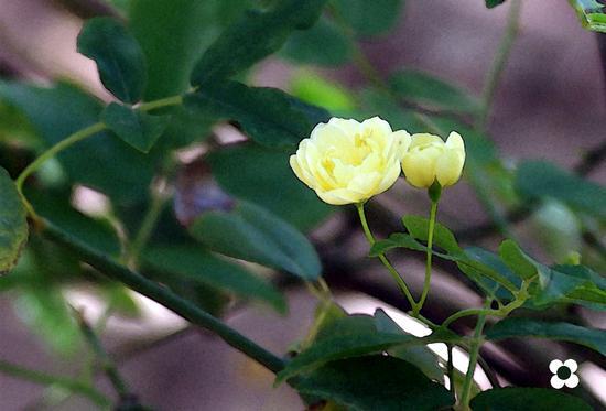 roselline - Modica (841 clic)