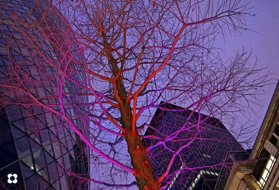 l'albero e il cetriolo (301 clic)