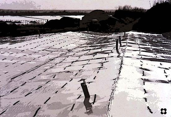 serre a Donnalucata (1945 clic)