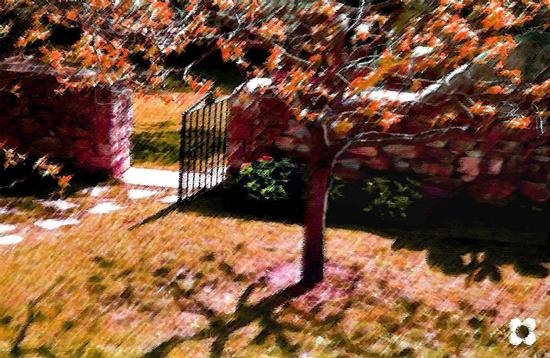 ultime foglie del kaki - Modica (916 clic)