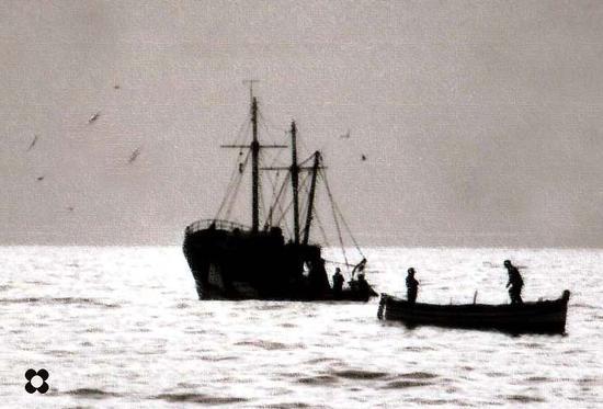 1- peschereccio e gabbiani - Donnalucata (2220 clic)