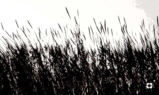 canne al vento - Portopalo di capo passero (2479 clic)
