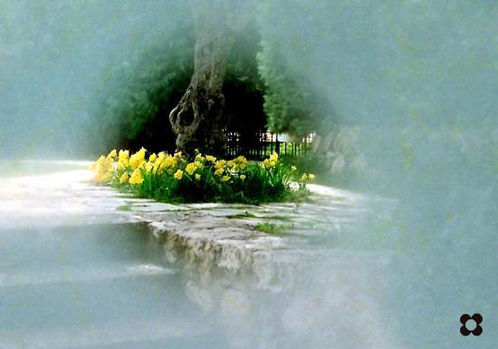 odore di fresie - Modica (1215 clic)