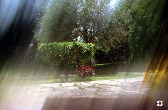 fra gli alberi - Modica (1041 clic)