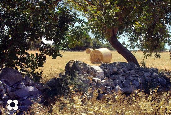 Cianciò, carrubo e muro a secco - Pozzallo (1511 clic)
