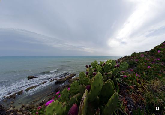 mare e ficodindia - Sampieri (1222 clic)