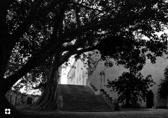 dal giardino - Donnafugata (1212 clic)