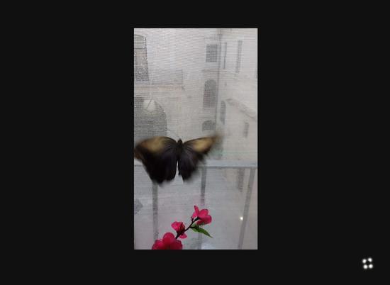 farfalle e piante tropicali a Modica (582 clic)