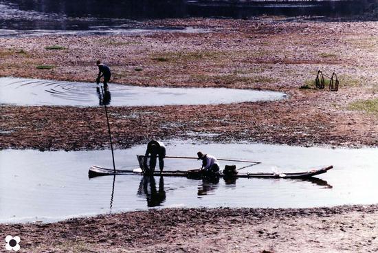 Guilin, raccolta delle alghe (765 clic)