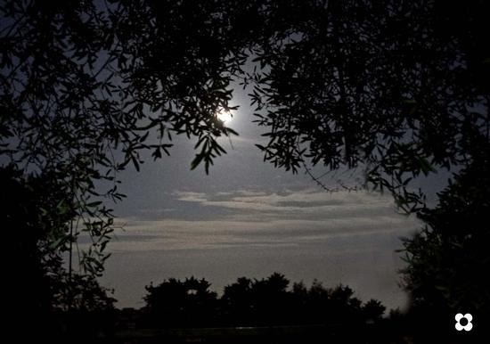 sotto l'ulivo al chiar di luna - Modica (2877 clic)