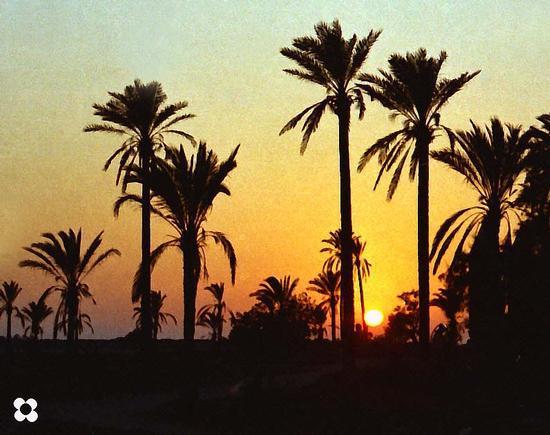 ricordando i colori e le palme di Tripoli - Modica (2260 clic)