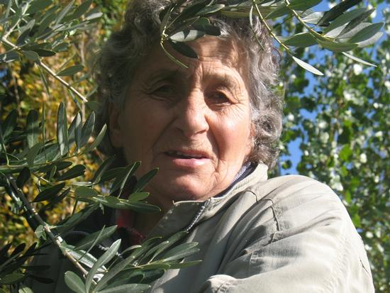 Raccolta oliva 2012 - Foligno (1121 clic)