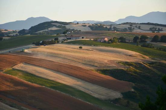 Paesaggio marchigiano - Staffolo (2578 clic)