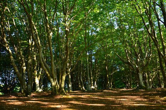 Sentiero nel bosco - Poggio san romualdo (3360 clic)