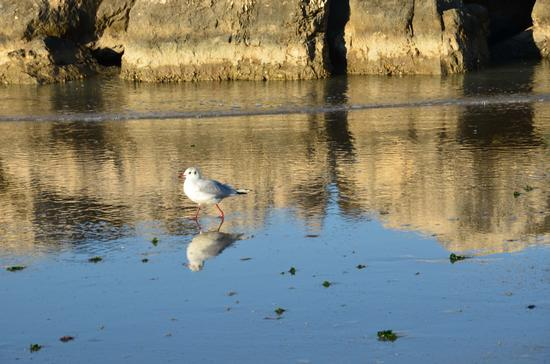 Il gabbiano....solitario - Senigallia (2570 clic)