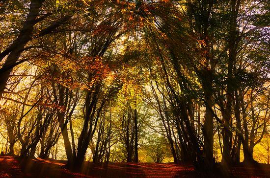 Il bosco incantato - San severino marche (2037 clic)