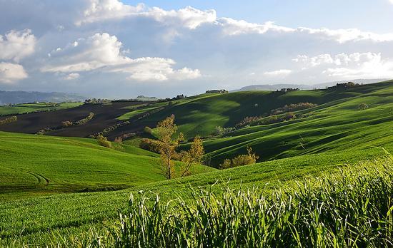 Tipico paesaggio Marchigiano - Jesi (1608 clic)