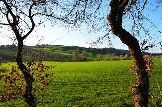 I colori dell'inverno - Osimo (853 clic)