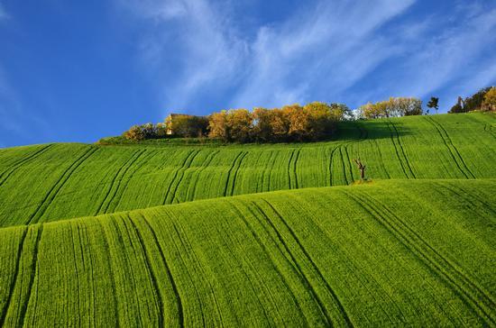 Dune verdi - San marcello (752 clic)