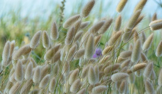 La carezza del vento - Marzocca (991 clic)