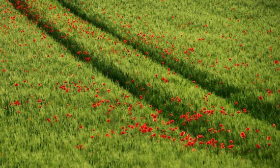 Pennellate di rosso (524 clic)