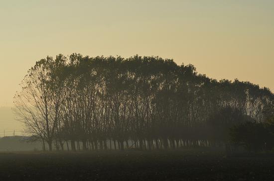 La bruma al mattino - Chiaravalle (1689 clic)