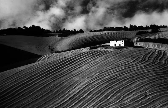 Grafismo in agricoltura (463 clic)