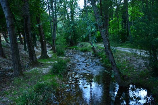 Sentiero delle libellule - Pergola (4125 clic)