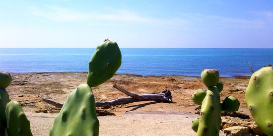 Mare - Punta braccetto (1489 clic)
