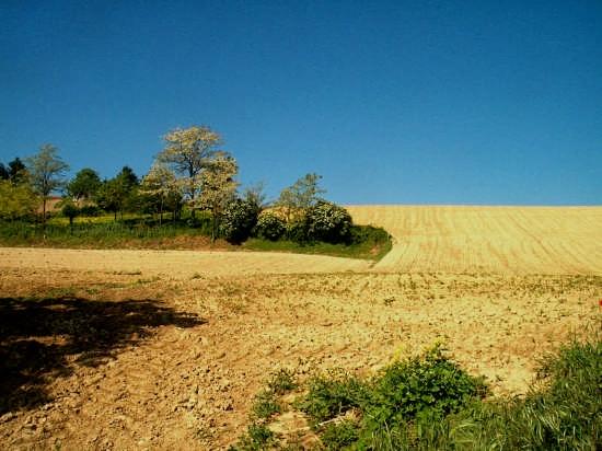 intarsi - Casorzo (2885 clic)
