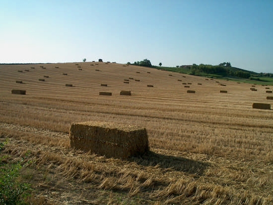 land art - Cuccaro (2738 clic)