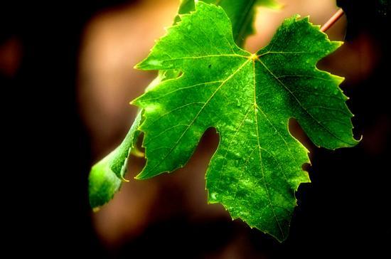 vitigno -  - inserita il 13-Sep-12
