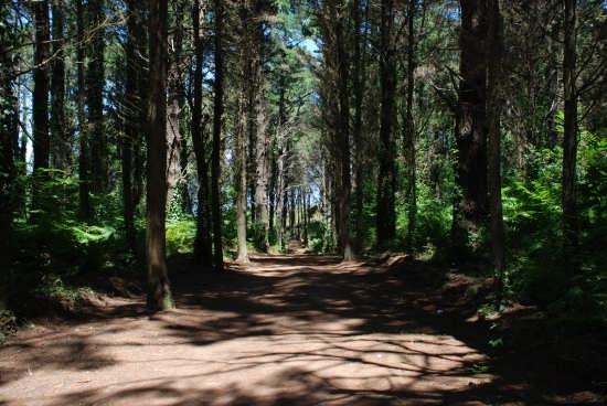 Pinetina - Curinga (2643 clic)
