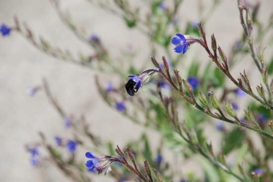 Macro di insetto su fiore in montagna a Curinga (CZ) (2843 clic)