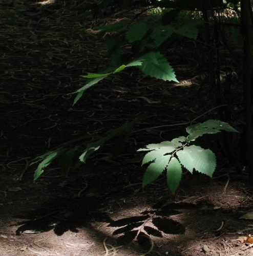 Foglie nella pinetina a curinga (2519 clic)