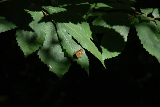 Farfalla nella pinetina a curinga (2483 clic)