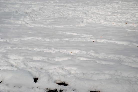 Giornata nevosa a Quattromiglia (castiglione cosentino) - Rende (3102 clic)